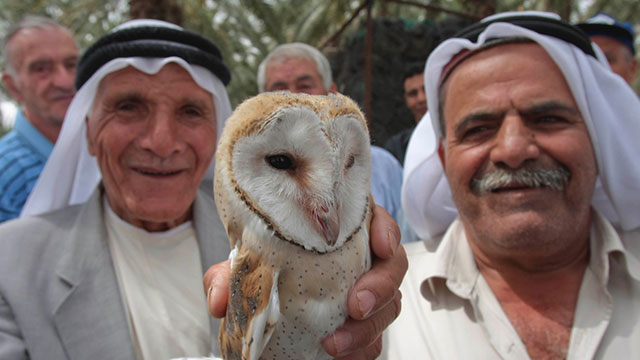 Owls and Ecosystems