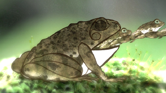 Frogs, Ecosystems & Cloning