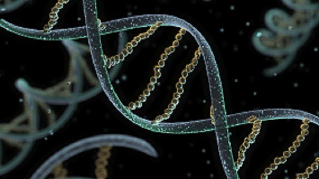 CRISPR and Human Embryos