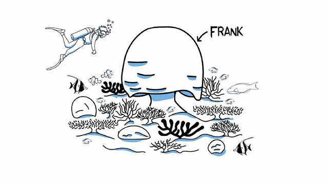 Coral Bleaching Explained: the story of Frank the coral