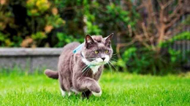 Citizen Science – Cats!