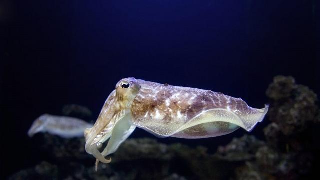 Top five examples of convergent evolution