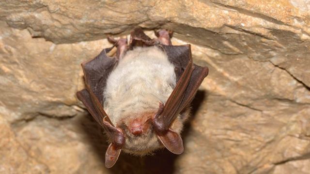 Ebola may have helped bats evolve to resist infection