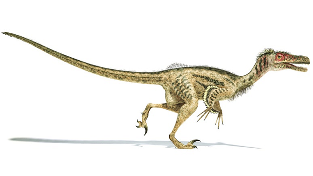 The feathered revolution: How dinosaurs became birds
