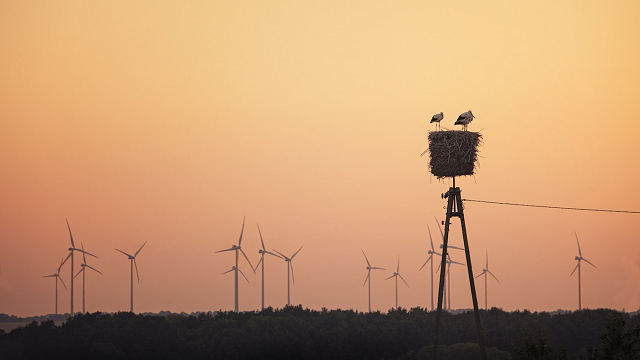 Wind farms bad for raptors, but good news for lizards