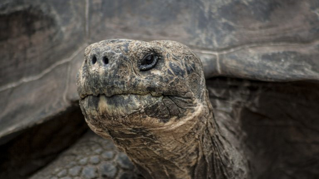 The genome of Lonesome George could unlock the secret of ageing