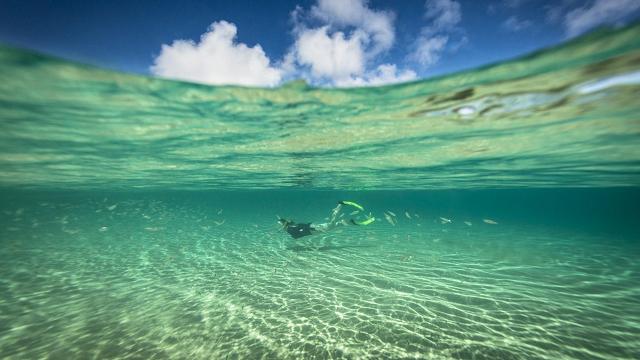 Sea temperature drives fish evolution