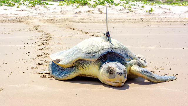 Mathematics could identify species extinction risks