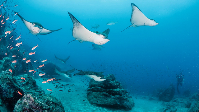 Galápagos islands contain more introduced species than thought