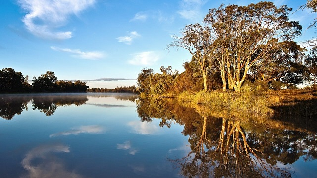 Murray River habitat restoration increases native fish populations