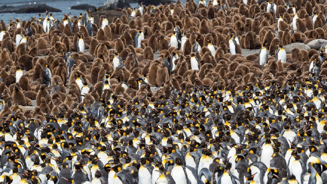 For Antarctic food webs, penguin poo is the gift that keeps on giving