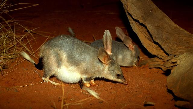 Predator exposure can help vulnerable species survive in the wild