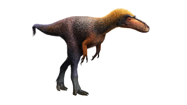 Tiny Tyrannosaur trod lightly 92 million years ago