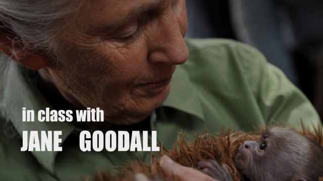 Jane Goodall on Chimpanzees