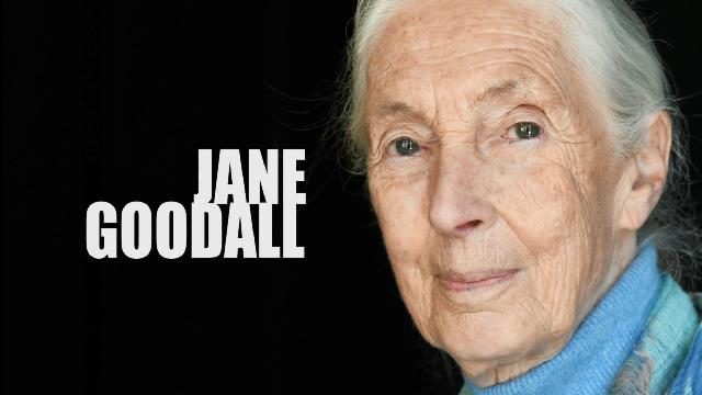 Tutorial: Jane Goodall on the Environment