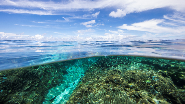 Microfibres are polluting the Great Barrier Reef