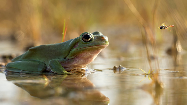 Scientists closing in on deadly frog fungus