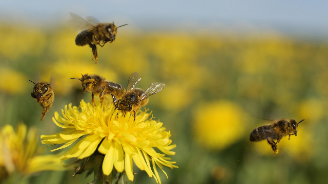 Honeybees get the concept of symbols as numbers