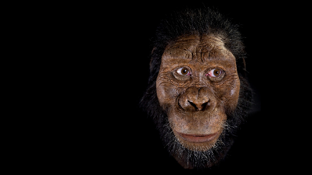 Ape-like face of early human ancestor revealed
