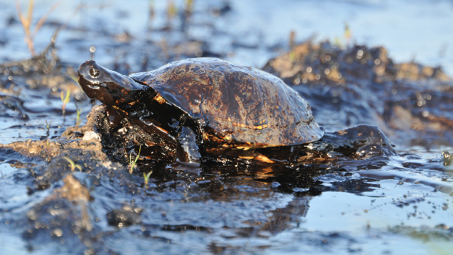 A safe way to clean up oil spills