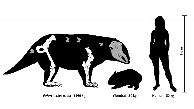 Megafauna more mega than we thought