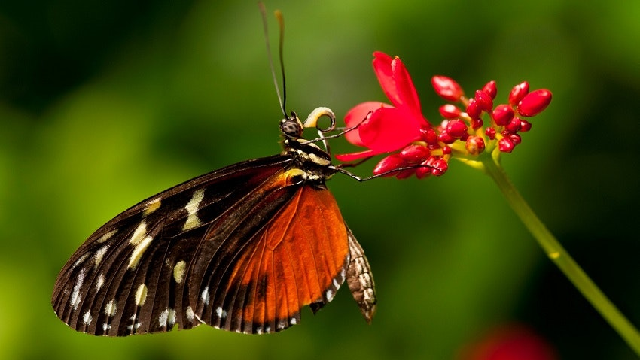 A few revelations about moths and butterflies