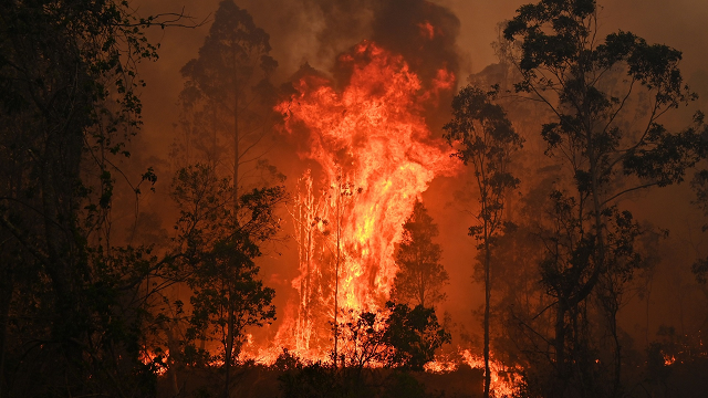Drought and climate change were the kindling, and now the east coast is ablaze