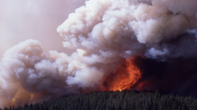 Firestorms and flaming tornadoes: how bushfires create their own ferocious weather systems