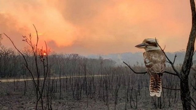 Hunter or hunted? When the world catches on fire, how do predators respond?