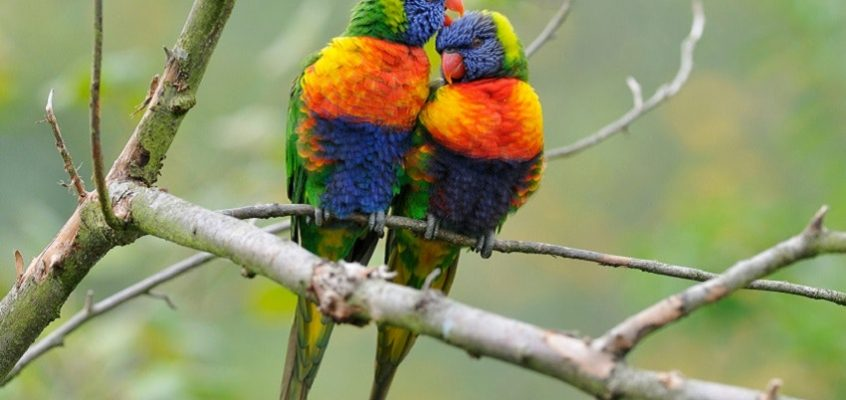 How do birds dazzle with colour and stay camouflaged?