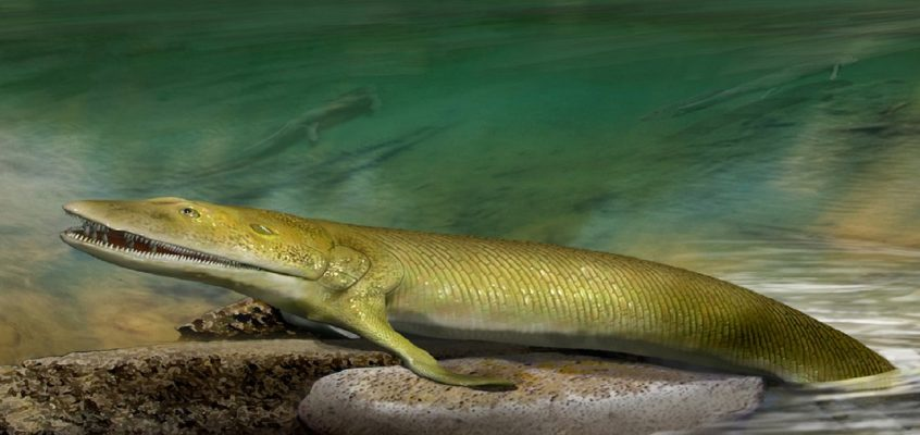 Ancient fish fossil reveals missing link in evolution of hand bones