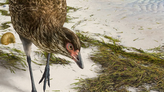 'Wonderchicken' fossil from the age of dinosaurs