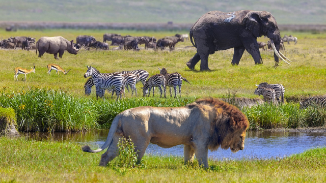 What shapes genetic diversity in mammals?