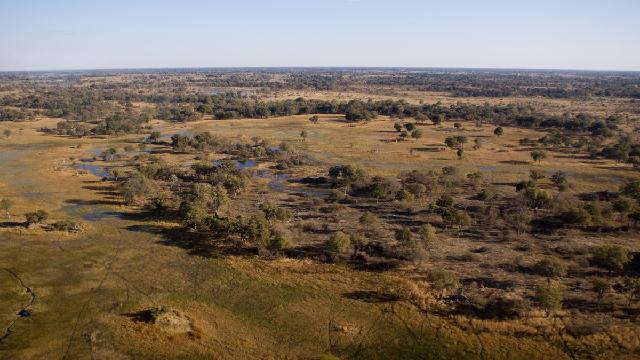 Did landscapes make land animals smart?