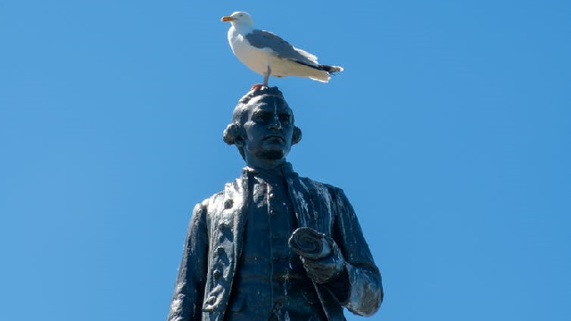 A statue of Captain James Cook with a seagull on his head