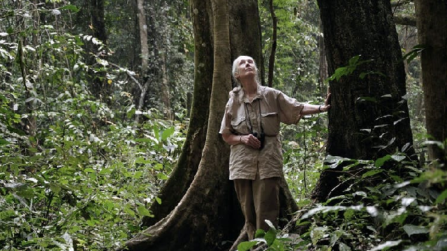 Jane Goodall walking through forest looking for chimps