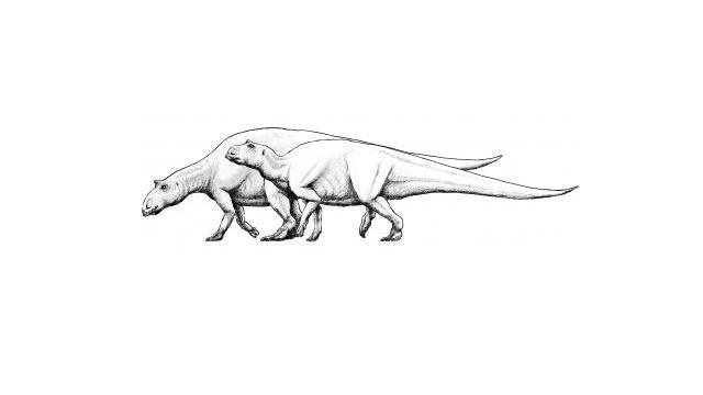 Can maths pick a dinosaur's sex?
