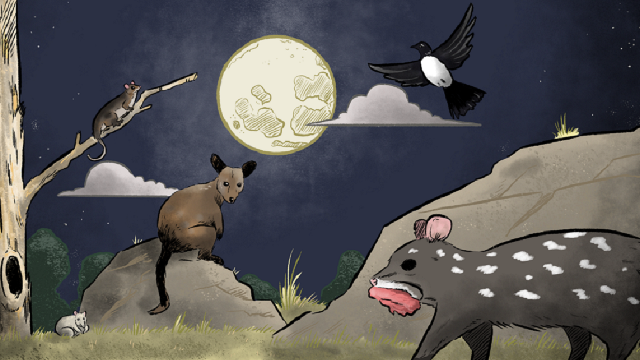 Animation of nocturnal Australian animals infront of a full moon