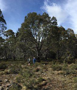 Two people walking in Australian bush