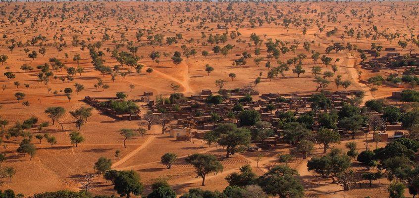 Sahara actually has quite a few trees