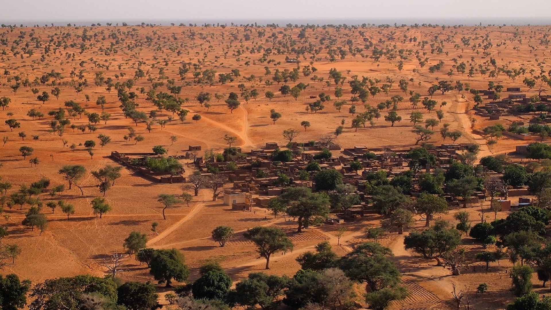 Trees across surrounding a village in a red desert in Mali, Africa