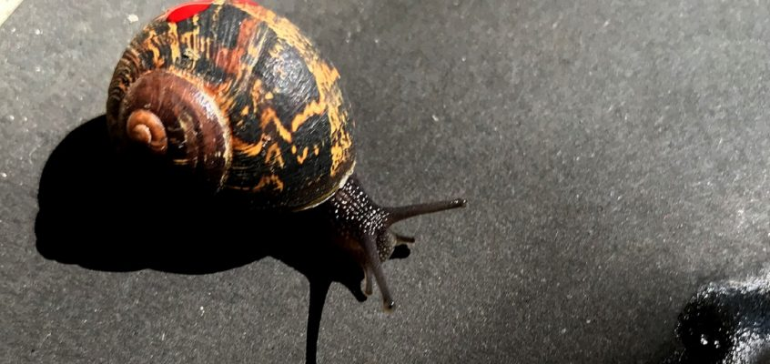 Your at-home guide to appreciating snails