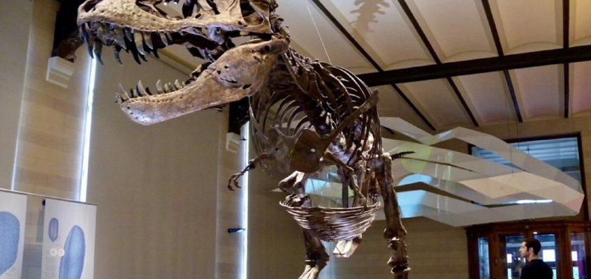 So, how do you weigh a dinosaur?