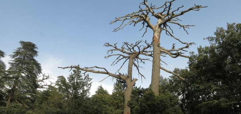 How droughts affect forests