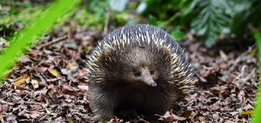 Grow some spines for EchidnaCSI