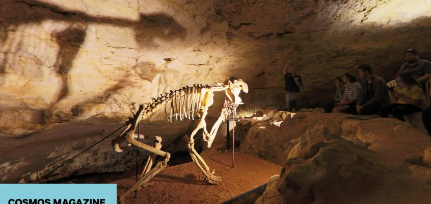 Naracoorte Caves: A rolls-royce record of biodiversity