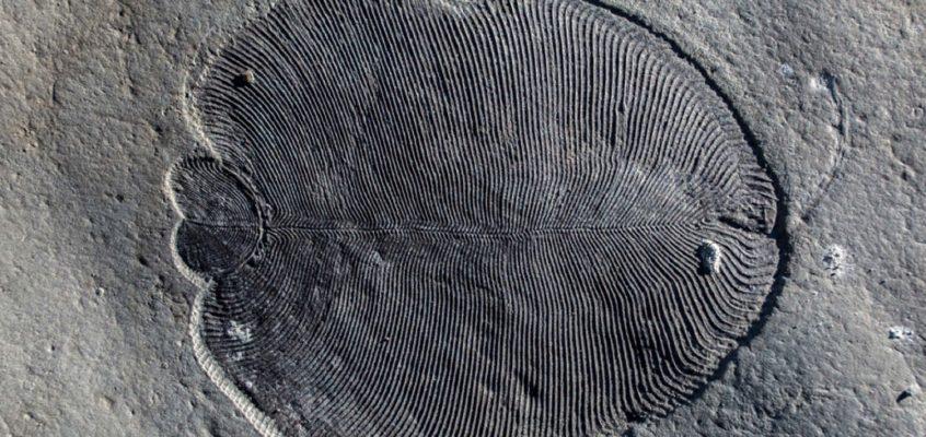 Ediacaran animals probably didn't look like their fossils