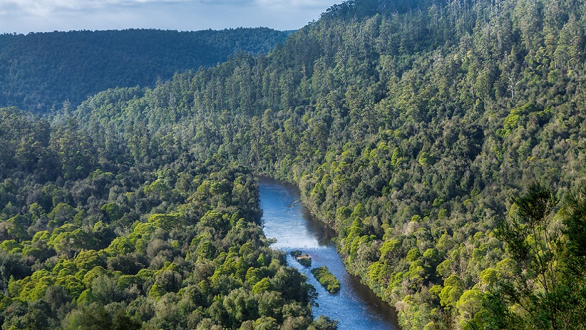 The Arthur River flowing through the green hills of the Tarkine Wilderness,
