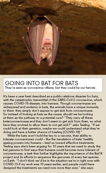 Bat hanging from rock