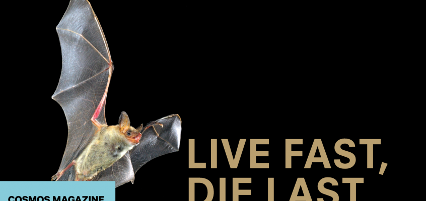 Live Fast, Die Last
